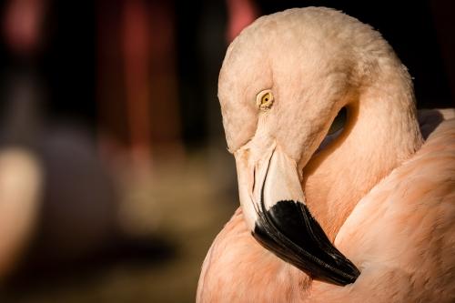 flamingo-001-2