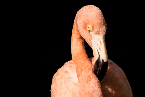 flamingo-003-2