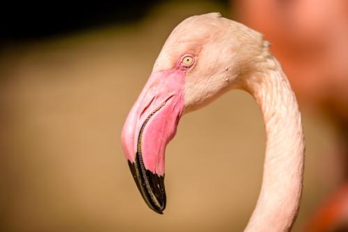 flamingo-010